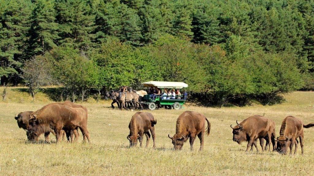 Safari-en-caleche